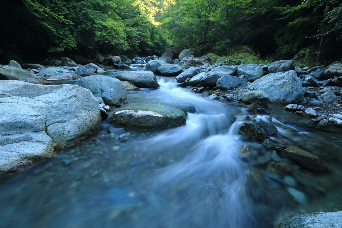 Canva - Stream flowing through forest.jpg